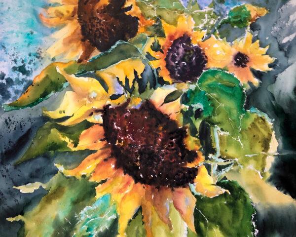 Sunflowers harvest